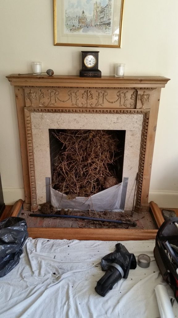 Jackdaw Nest Removal Property Maintenance Essex